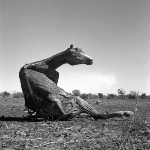 """Sidney Nolan, """"Carcass"""", 1952"""